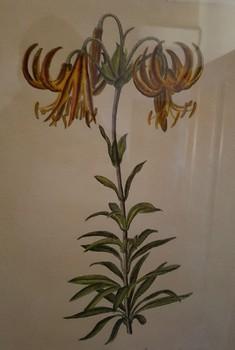 161130 Loppiano SEC Azienda vegetale 06 rid