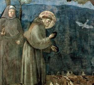 San Francesco Giotto rid