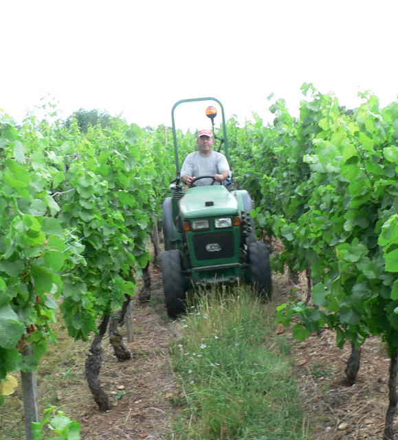 tracteur-ds-vignes a