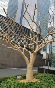Albero Seoul rid